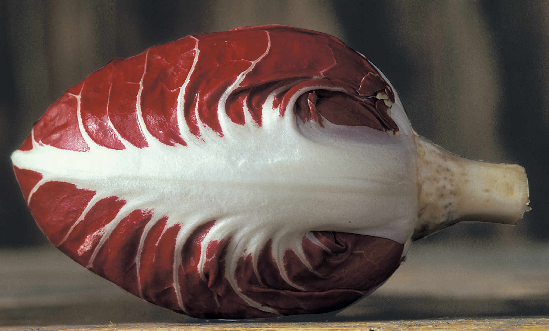 Radicchio of Verona, A Red Gem
