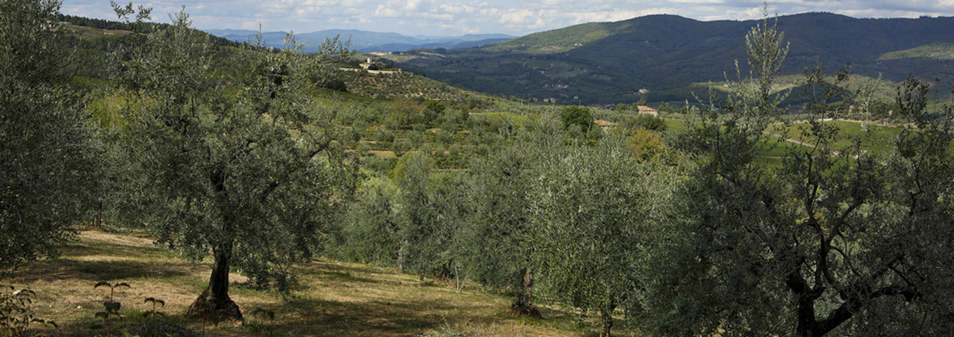 The Chianti and Terre di Siena PDOs