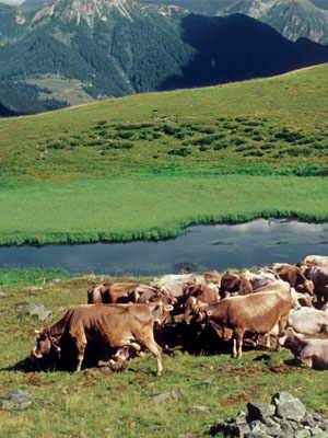 The Pastures of the Brembana Valley