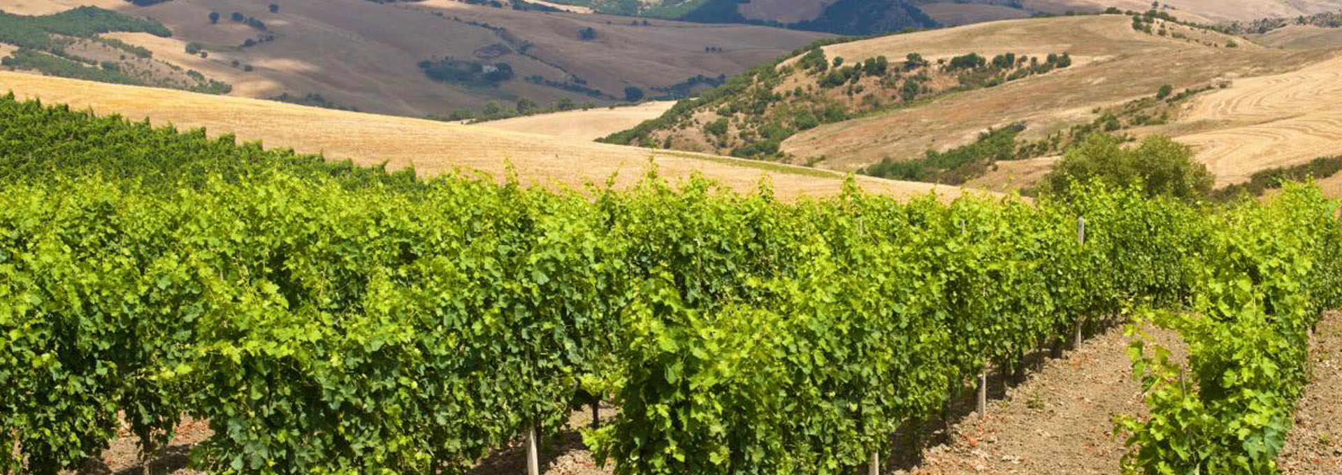 Basilicata Wines: Discovering The Excellence