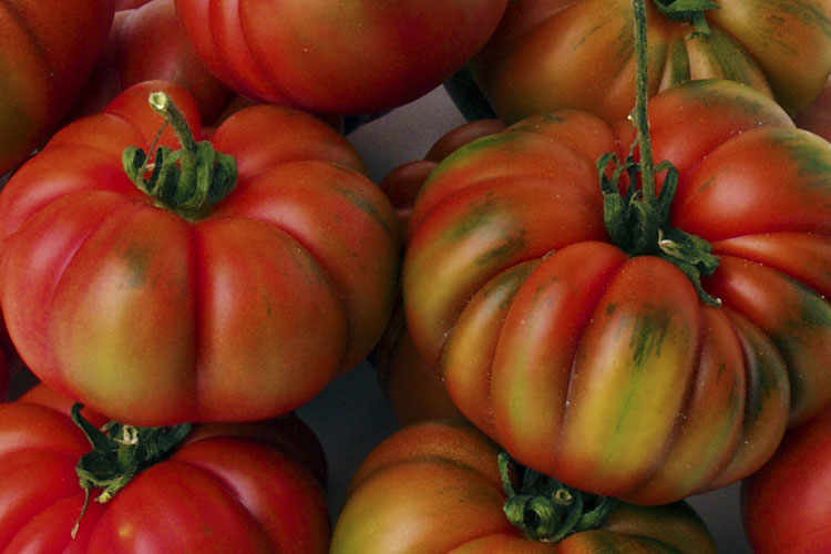 The Tomato of Pachino: Costoluto.