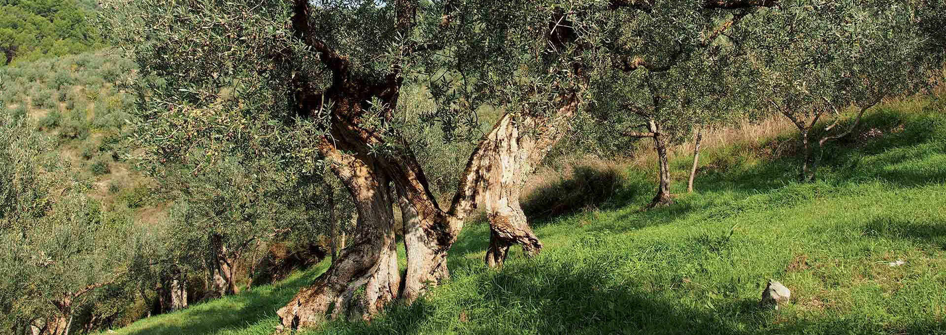 The Umbria PDO: Colli Martani and Colli Amerini