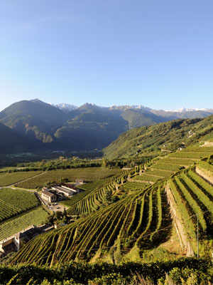 Valtellina Red Wines